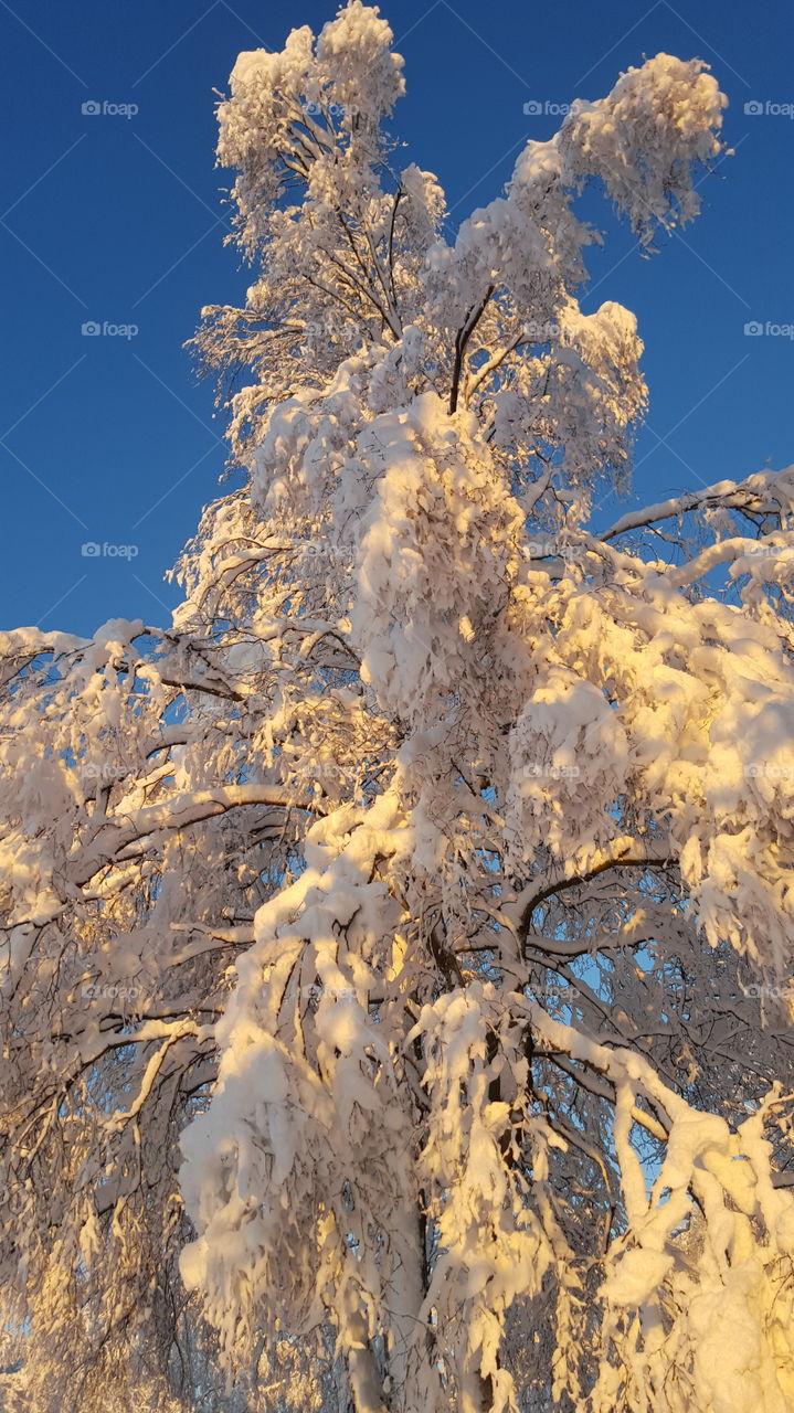 View of frozen tree