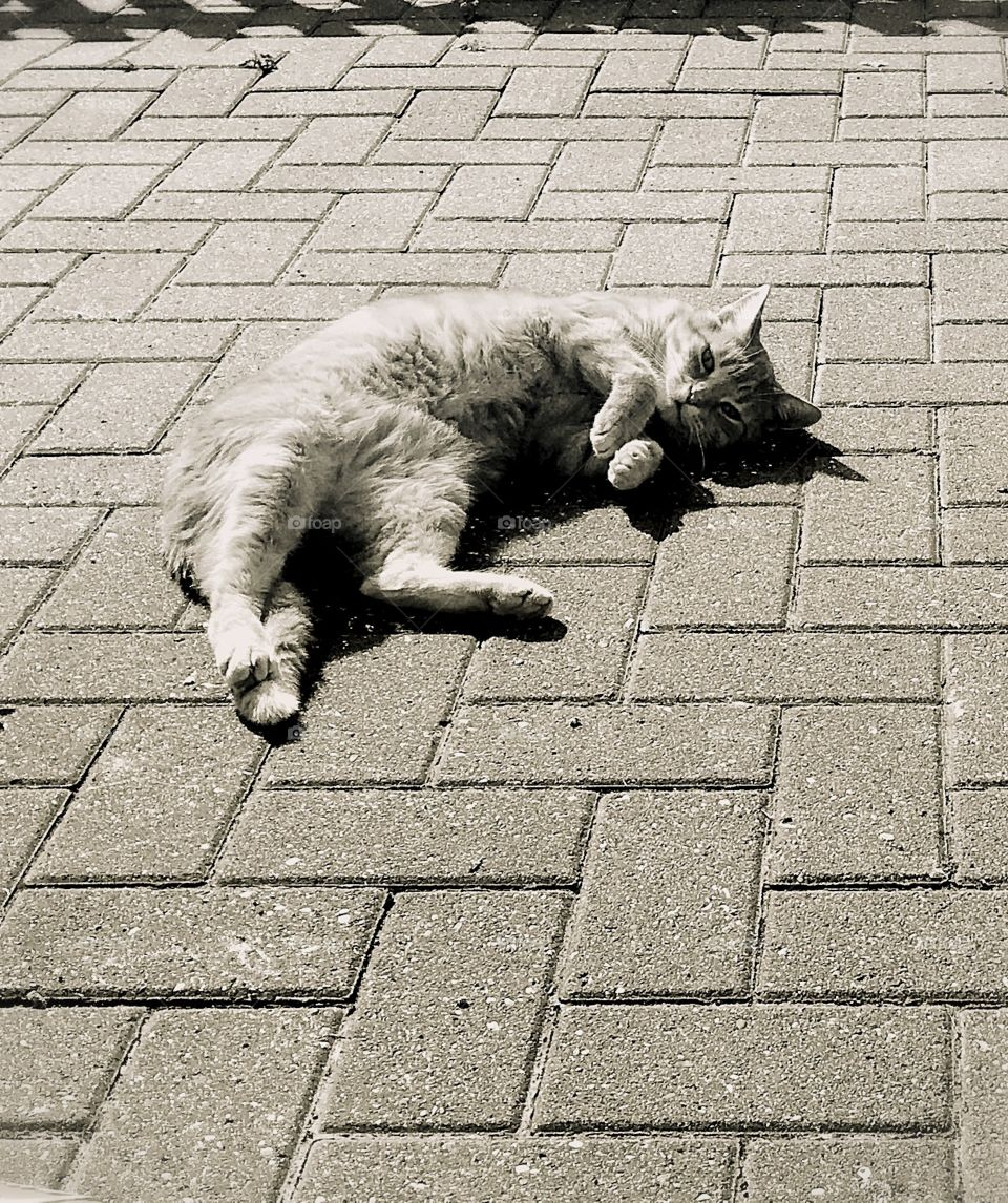 Relaxation time on the block paving! This boy just loves the lens- poser cat- fantastic model!