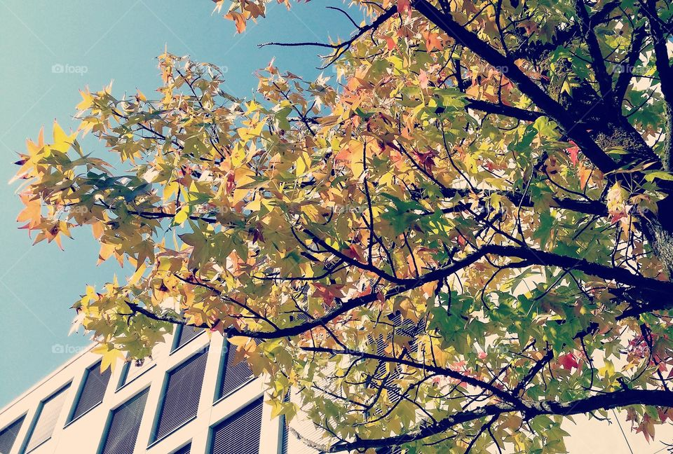 Beautiful image of autumn leaves with blue sky.