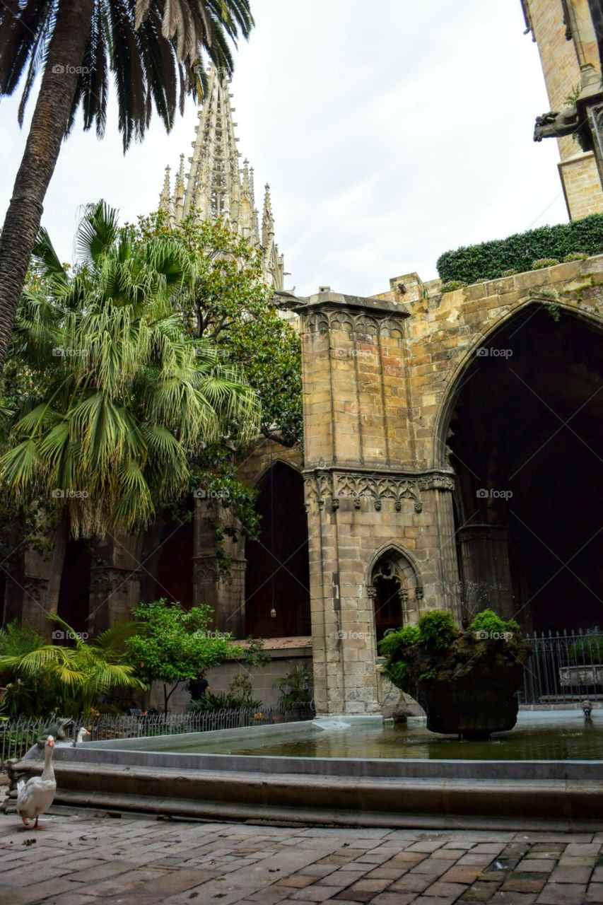 Barcelona Cathedral Cloisters. Barcelona, Spain
