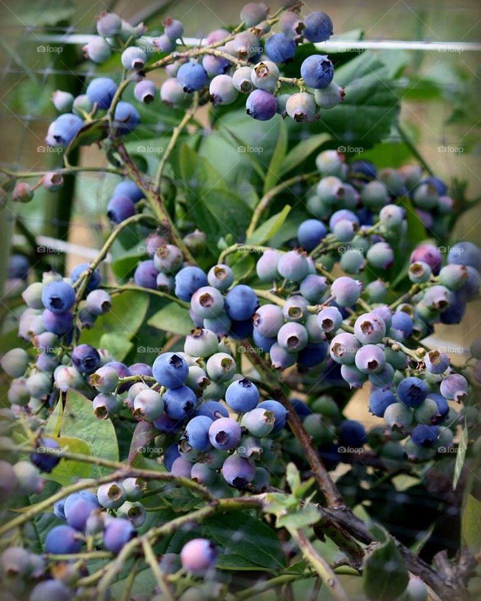 I found my thrill on Blueberry hill