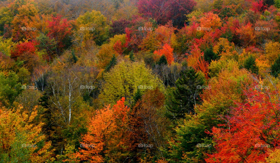 Colorful Fall foliage in Vermont.