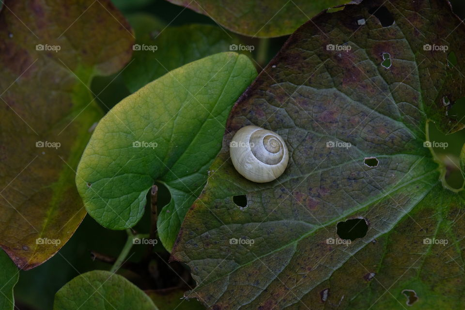 Moody closeup of a snail with white shell on a rusty leaf.