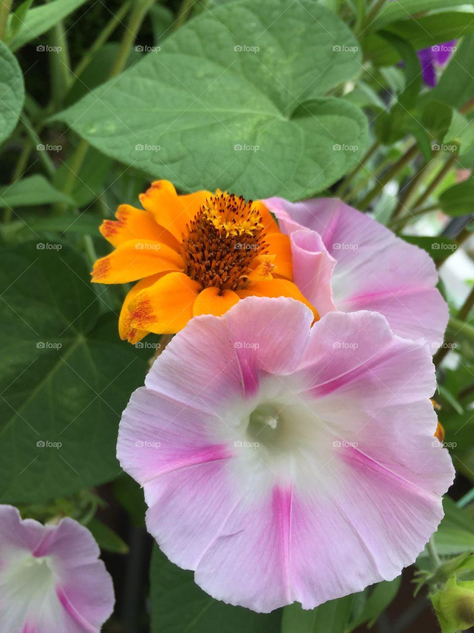 Species of flowers. Different species of flowers