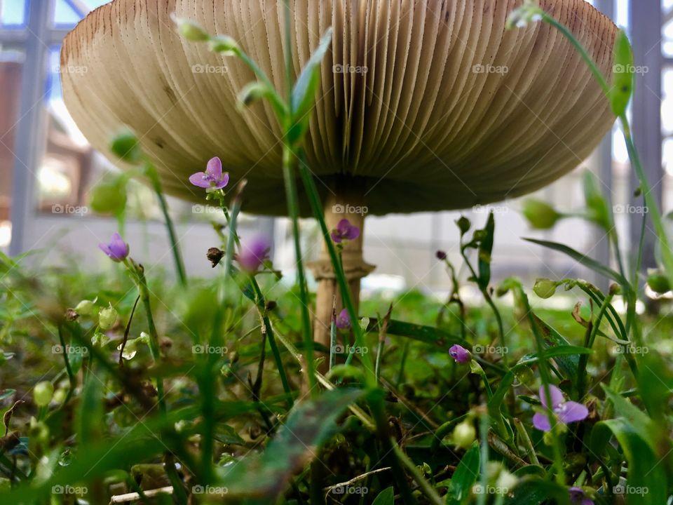 Mushroom with little purple flowers 💐