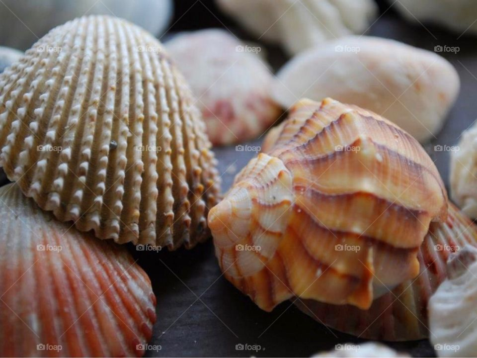 A close-up of seashell and conch shell