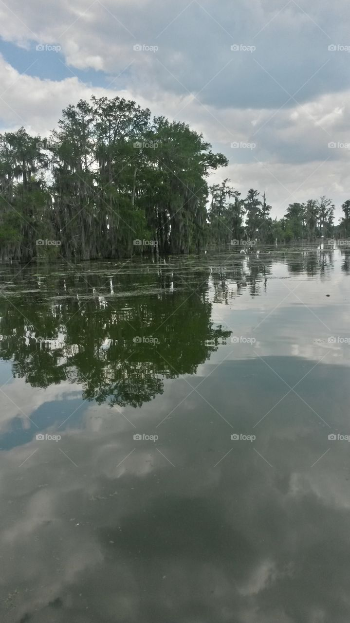 lake martin. lake Martin. breaux bridge,  Louisiana