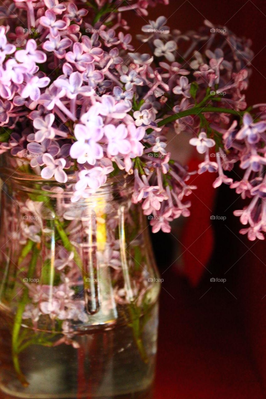 purple flowers in glass vase