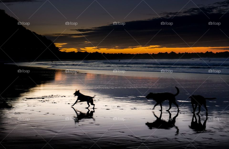 Silhouette of dogs running at beach