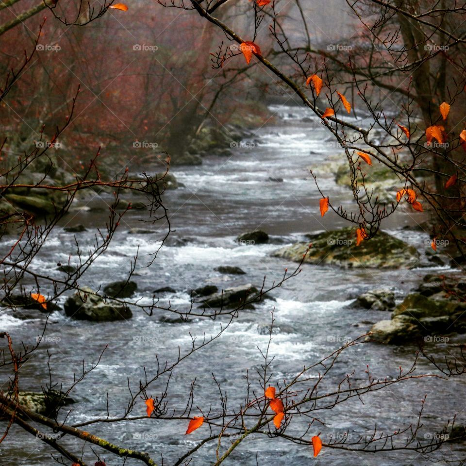 The creek in winter