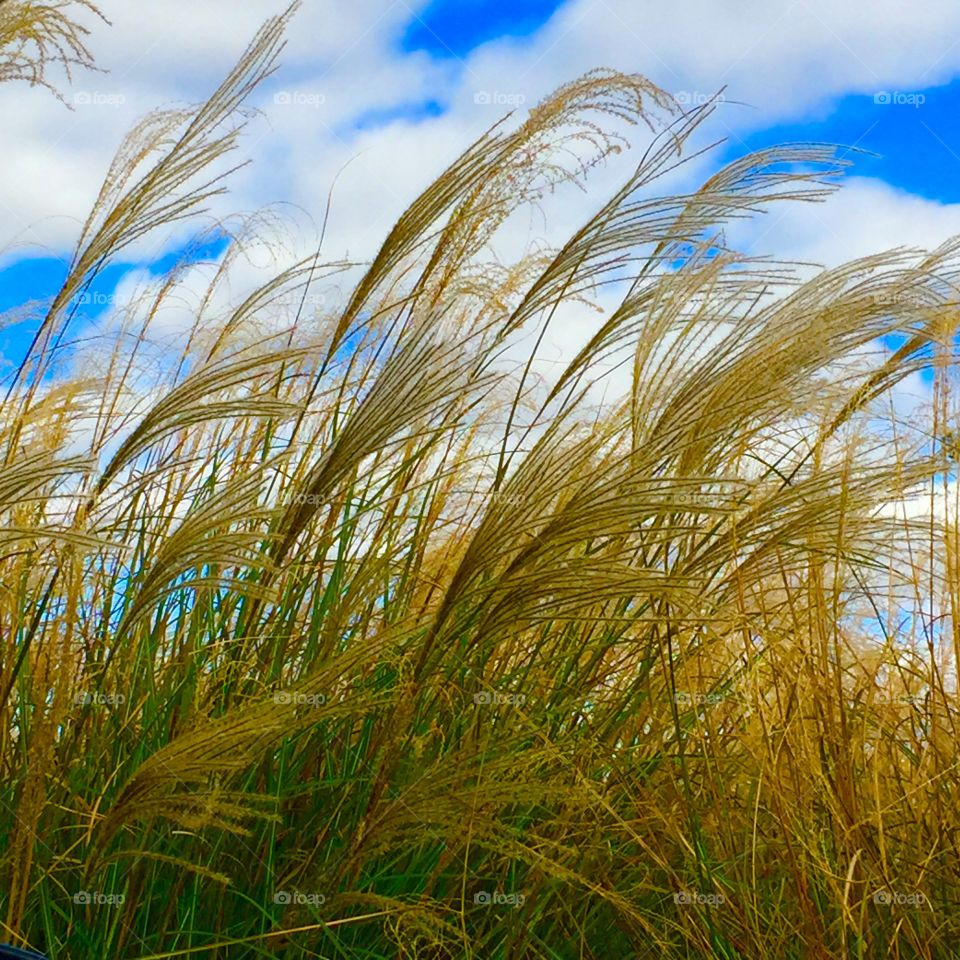 Grass against cloudy sky