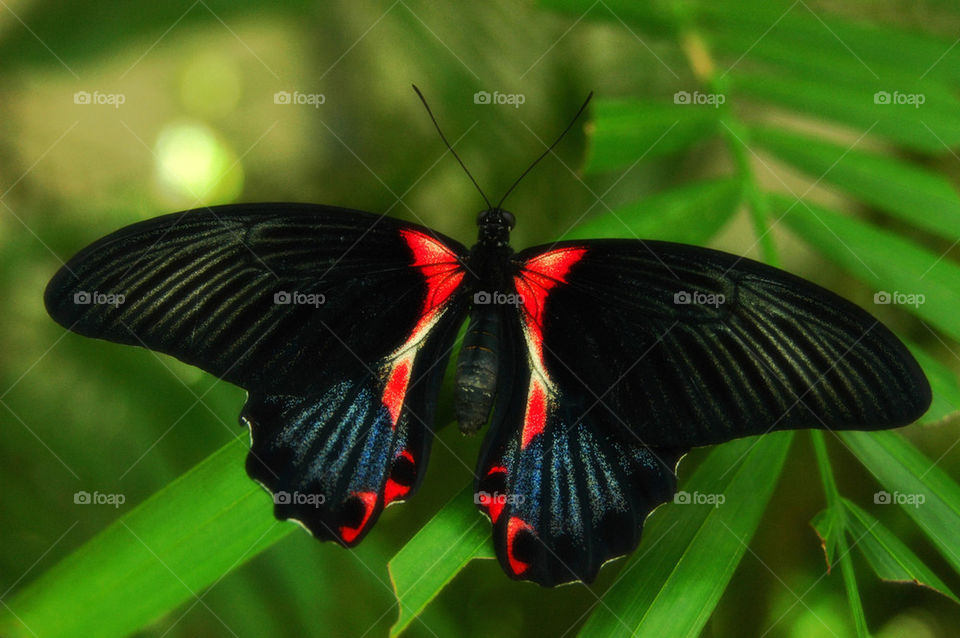 nature butterfly insect by cdnrebel1