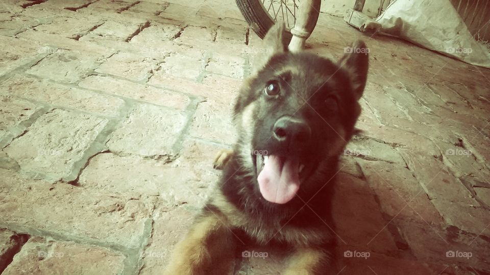 lovely puppie