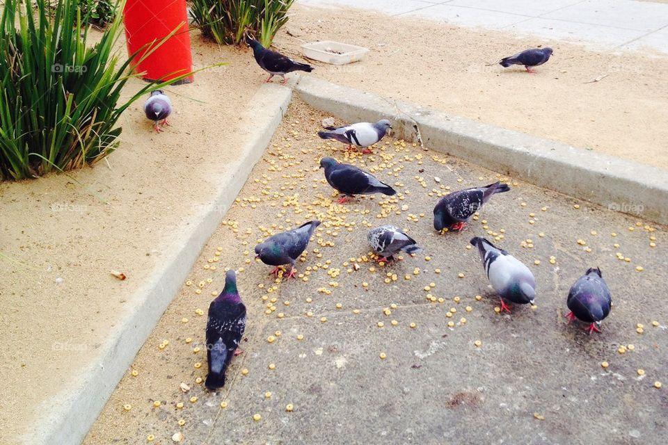 Birds Feast