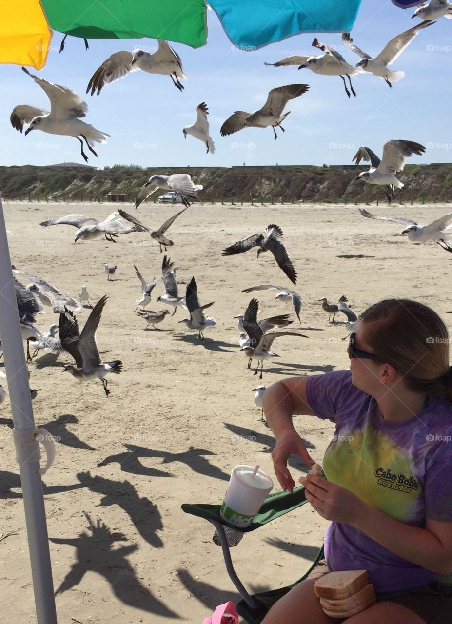 Feeding beach birds