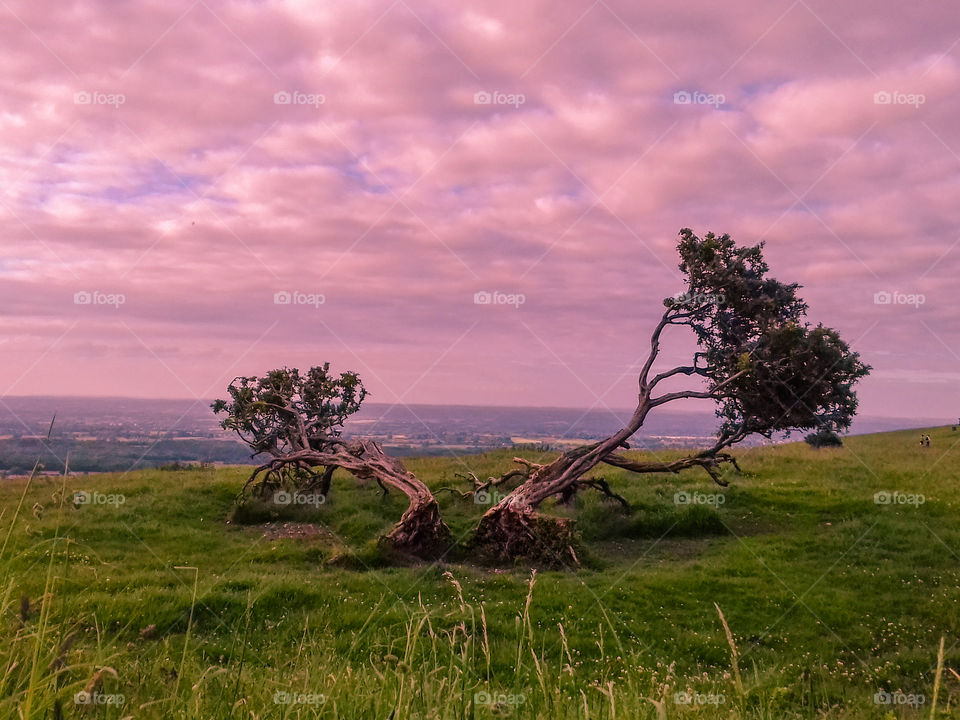 Scenic view of tree against cloudy sky at sunset