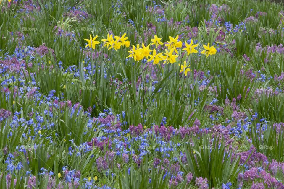 Spring flowers meadow  Vårblommor äng