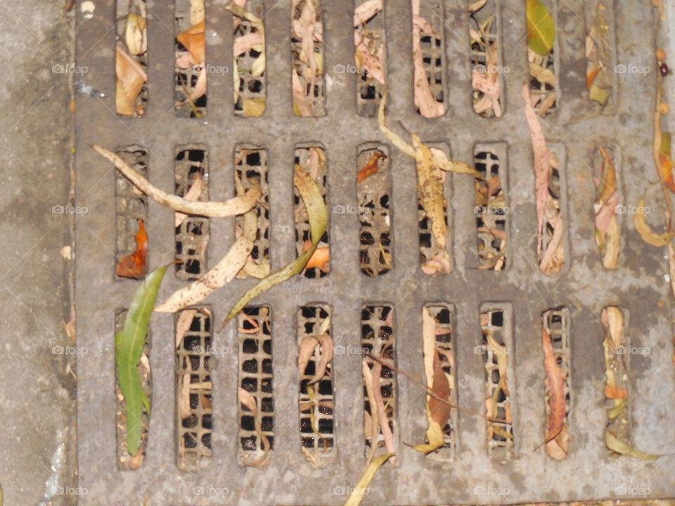 Leaves drain