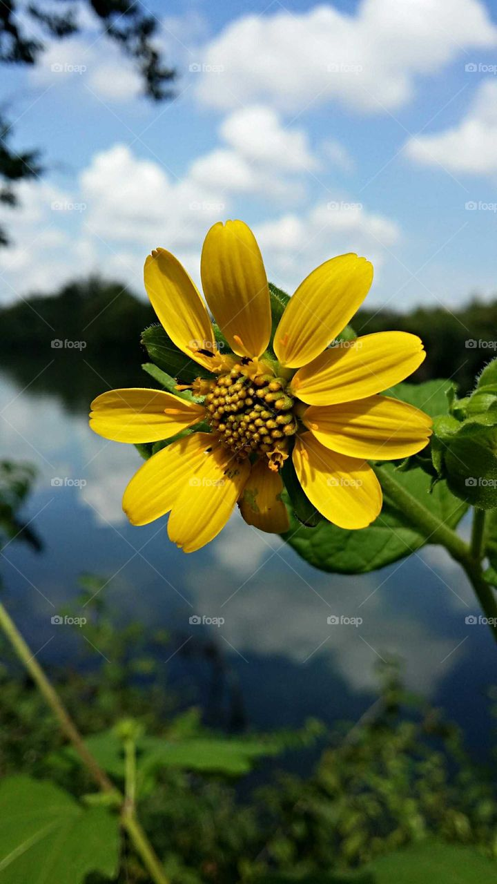 Flower by the Water