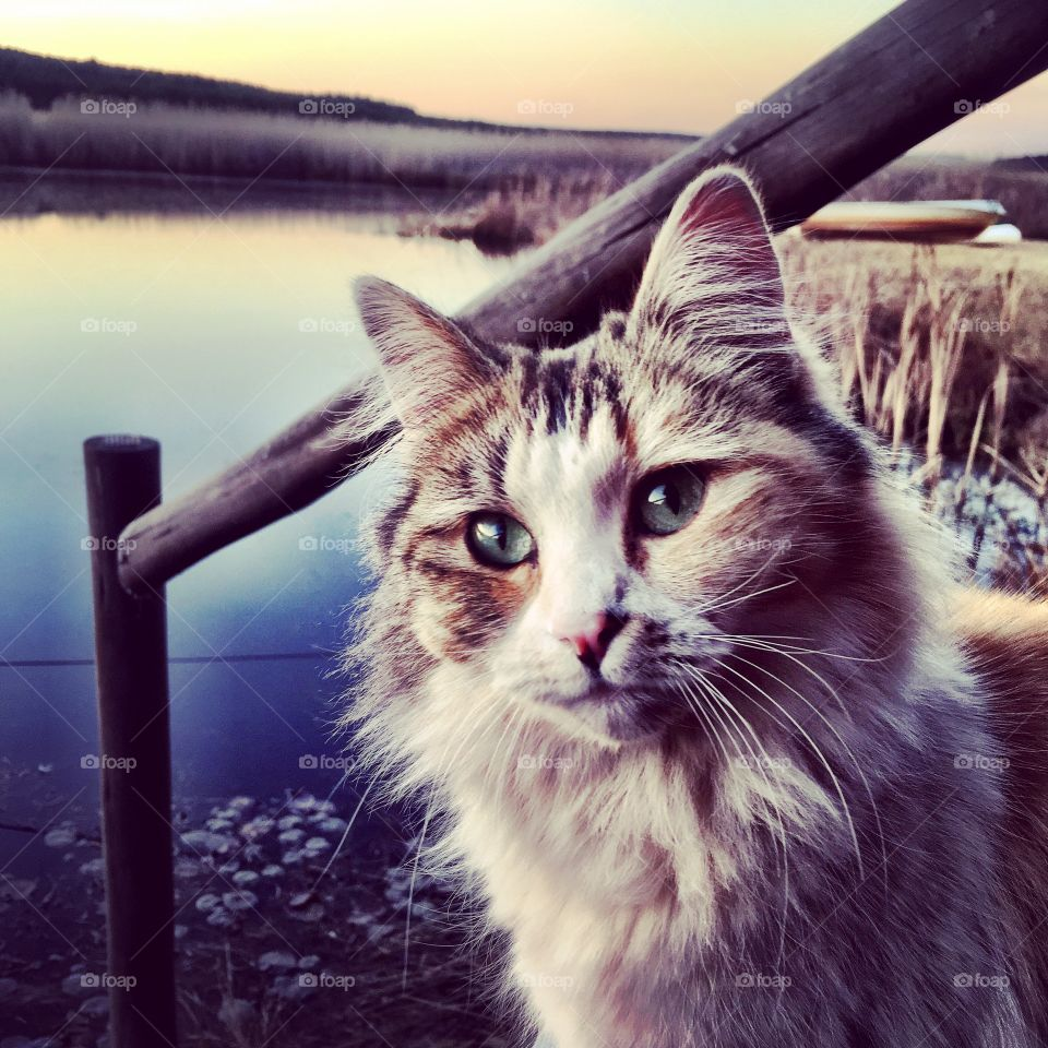 Close-up of cat against lake