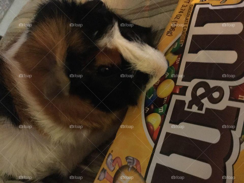 Love Fun Size M&M chocolate