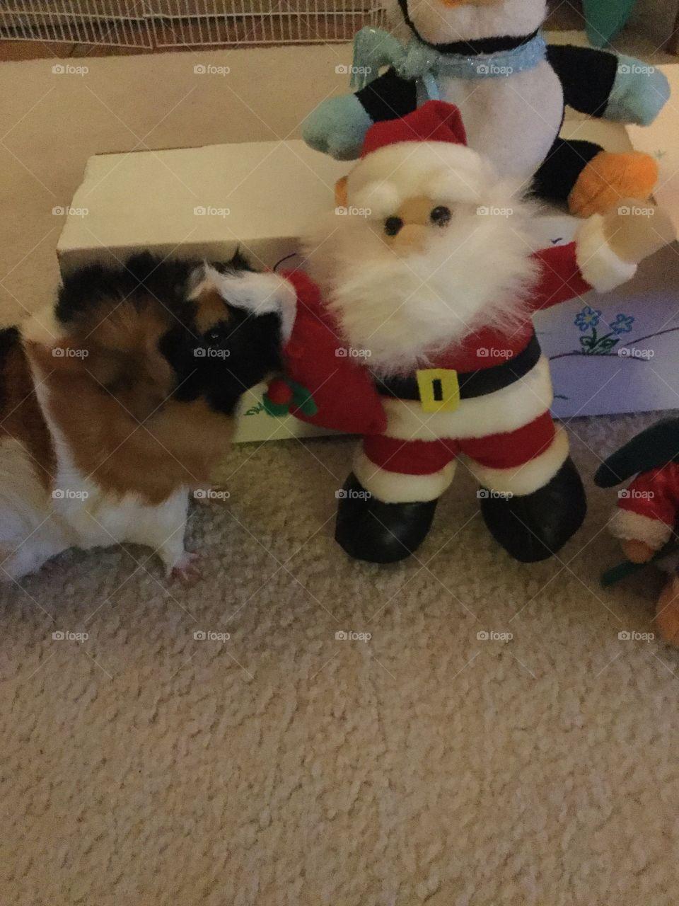 Dog, Mammal, Christmas, No Person, Winter