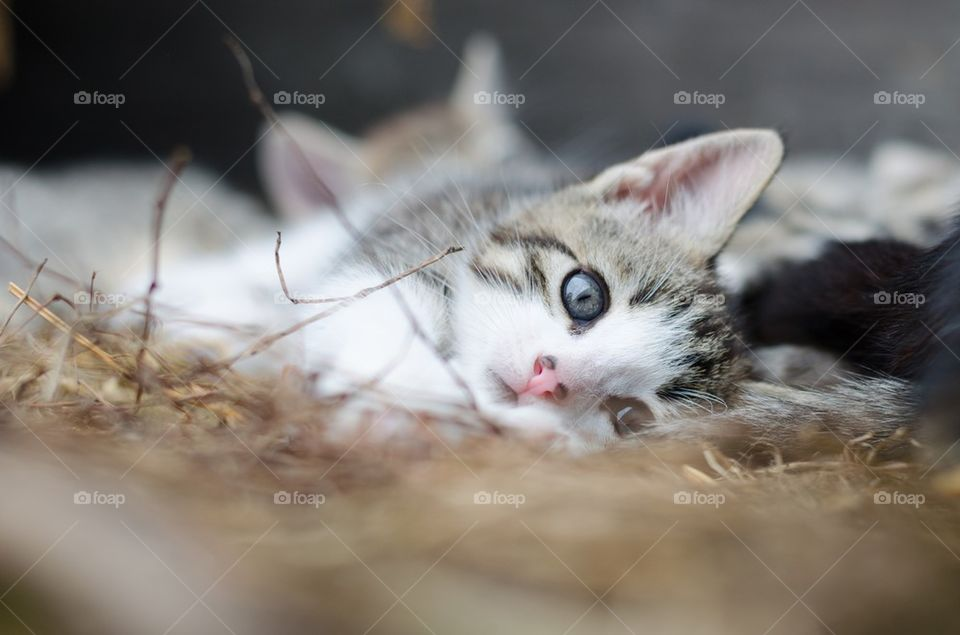 Cute kitten with dots on nose