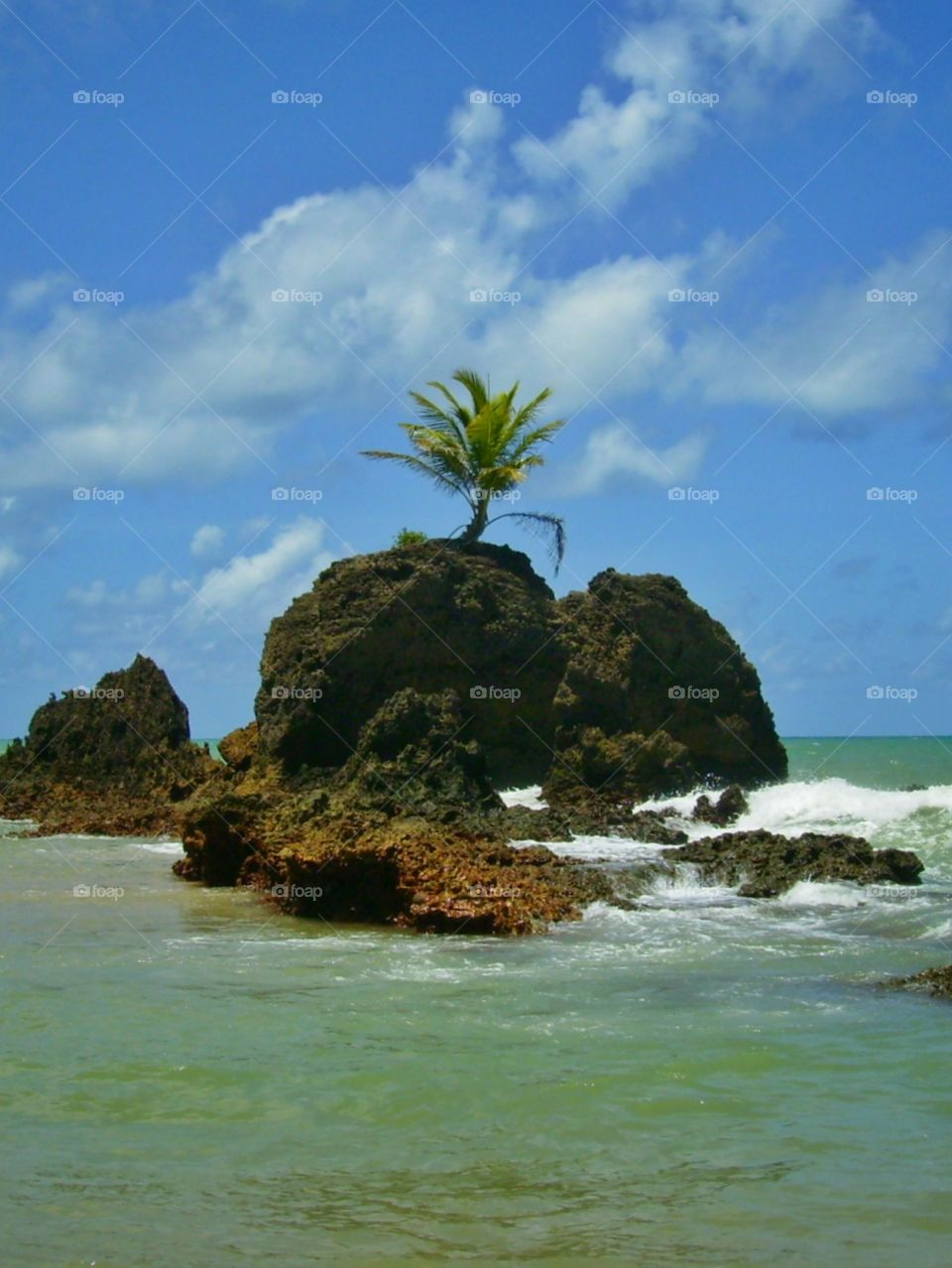 Palm tree born over a solid rock! :O