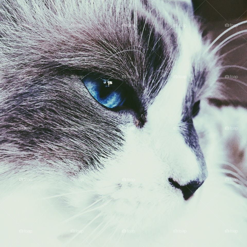 This is my cat Pettsson