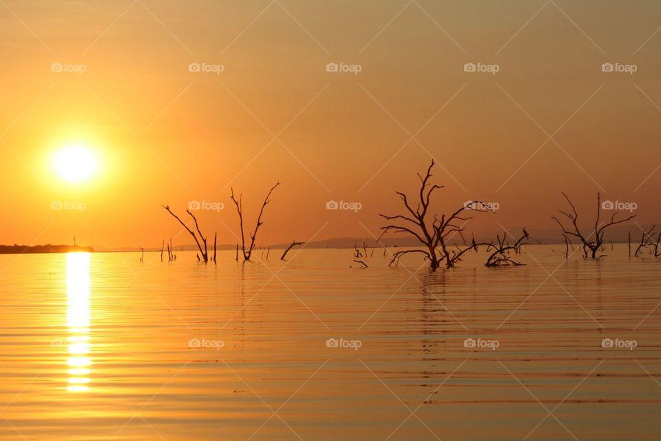 Lake of trees
