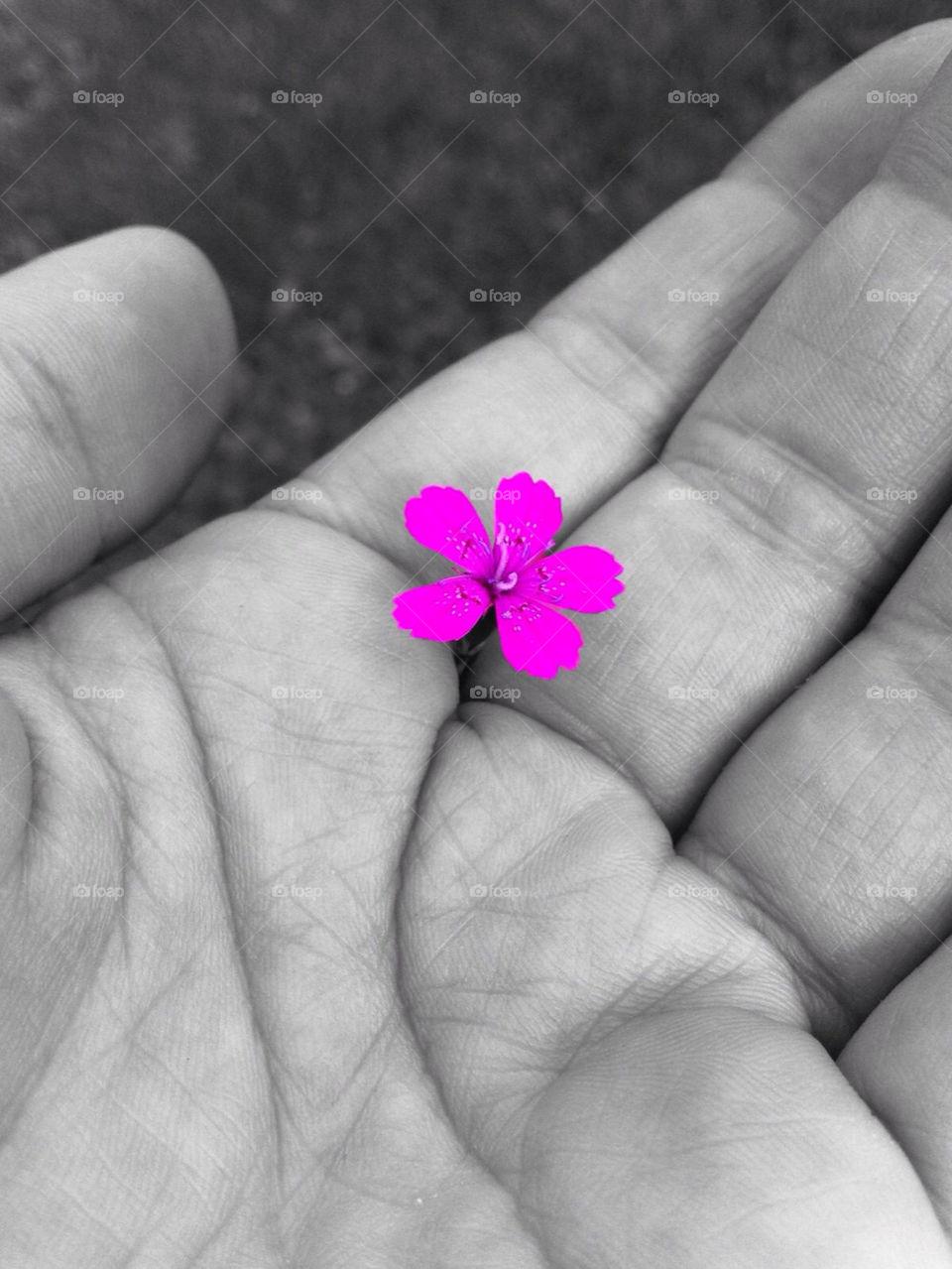 flower grass purple blomma by paula
