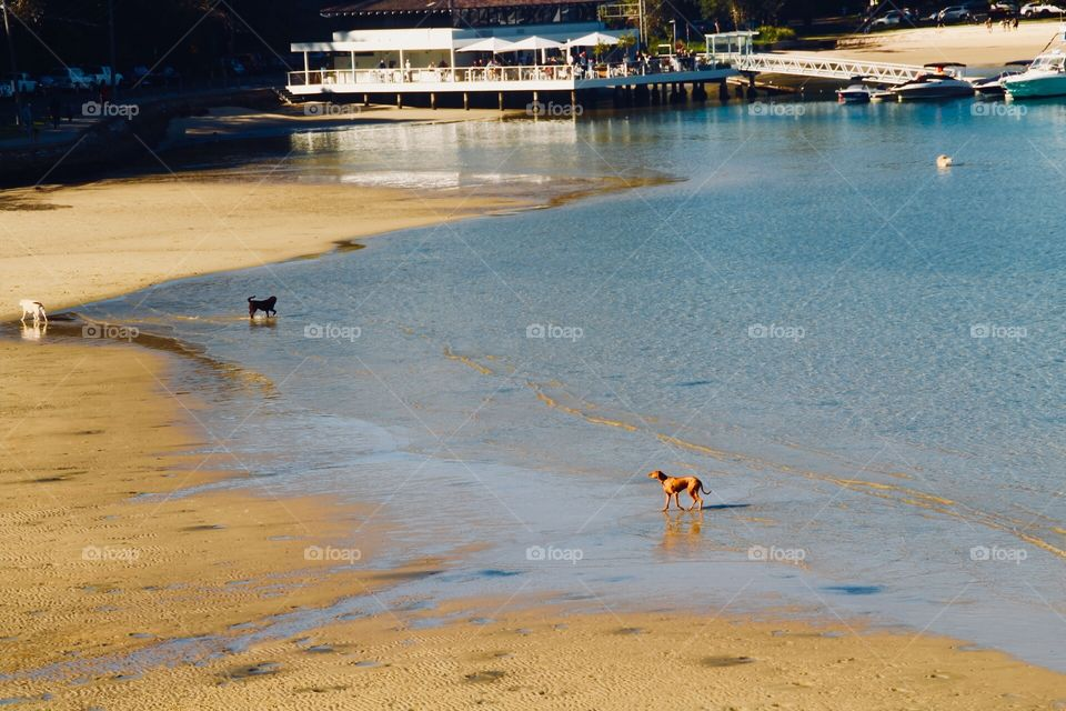 Watching the dogs enjoy themselves on the beaches along the coast in New South Wales, Australia during winter