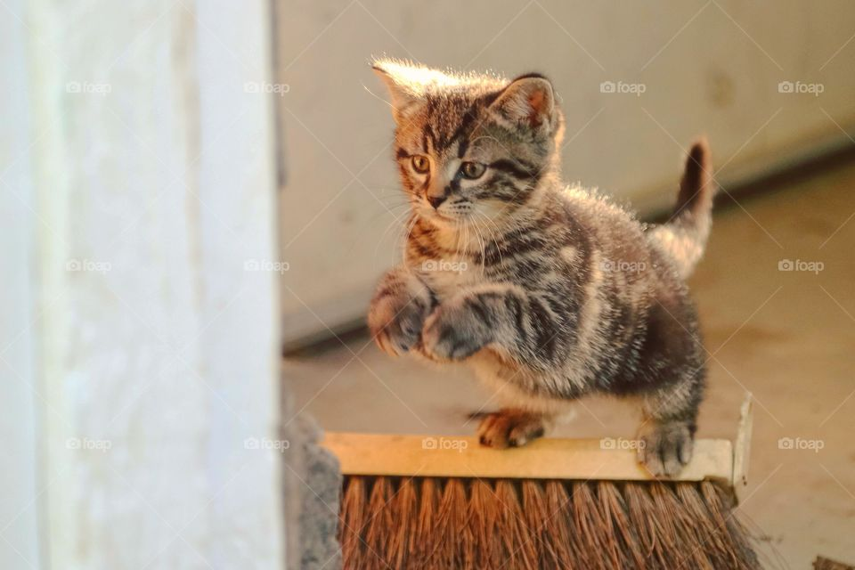 A cute fluffy kitten