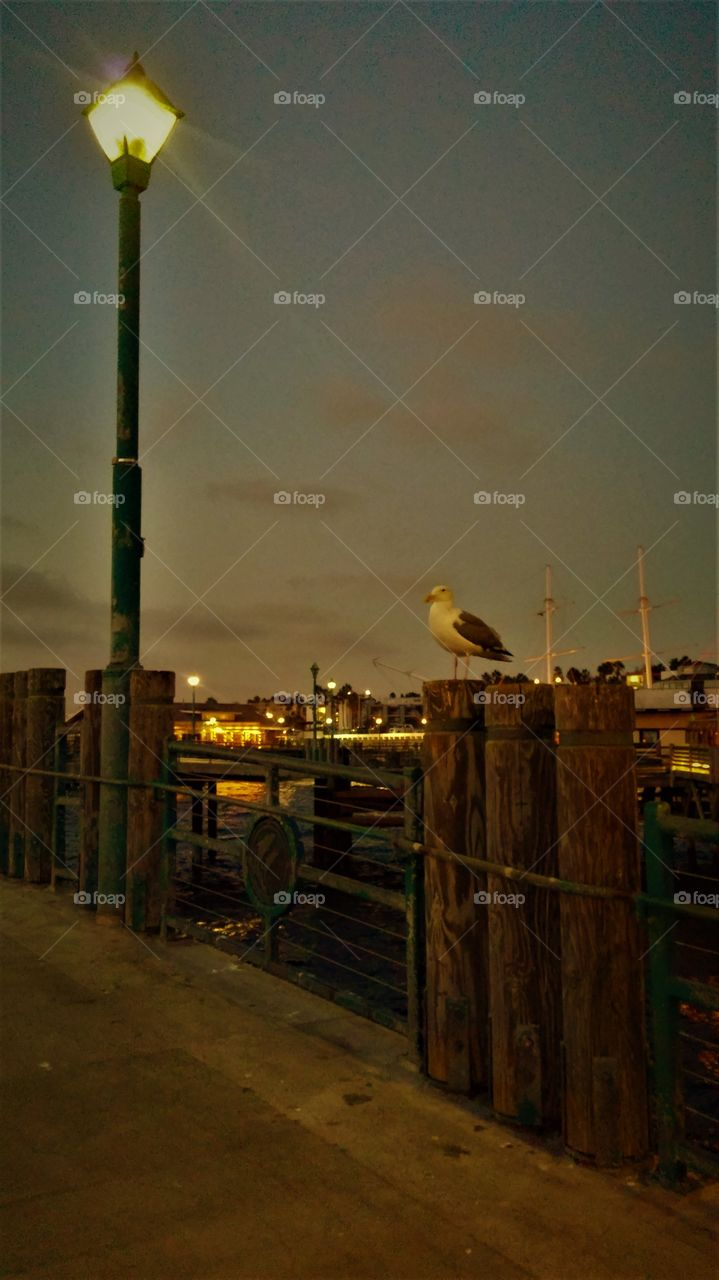 perched seagull under street lamp