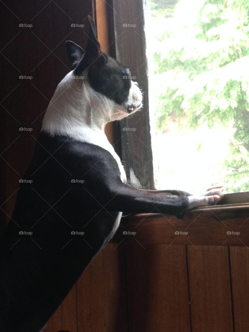 Mammal, One, Portrait, No Person, Dog