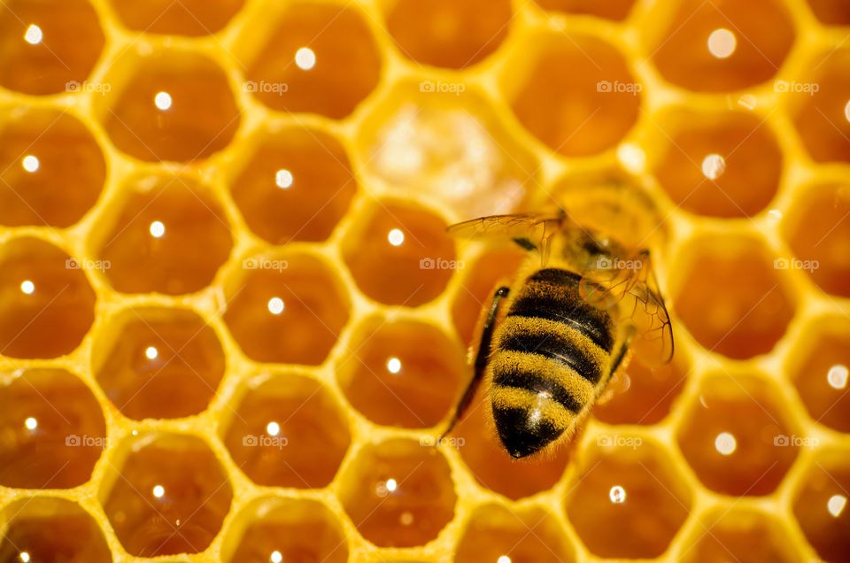 Honeycomb with bee
