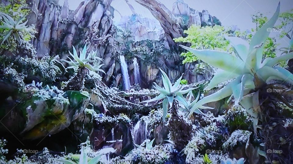 Nature, Flora, Leaf, Flower, Tree