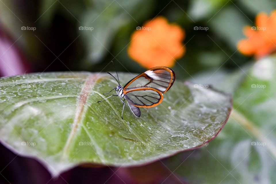 Nature, Leaf, Insect, Garden, Flora