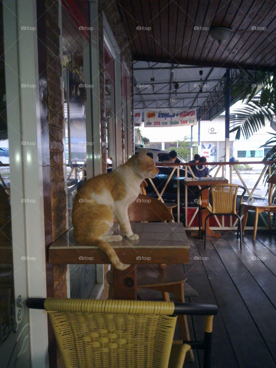 """street cat at """"coffee lover shop"""""""