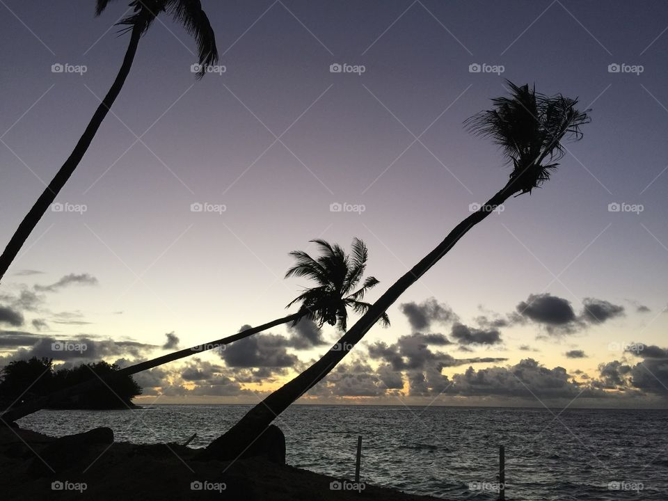 Palms Silhouetted At Sunset. A tranquil evening in paradise.