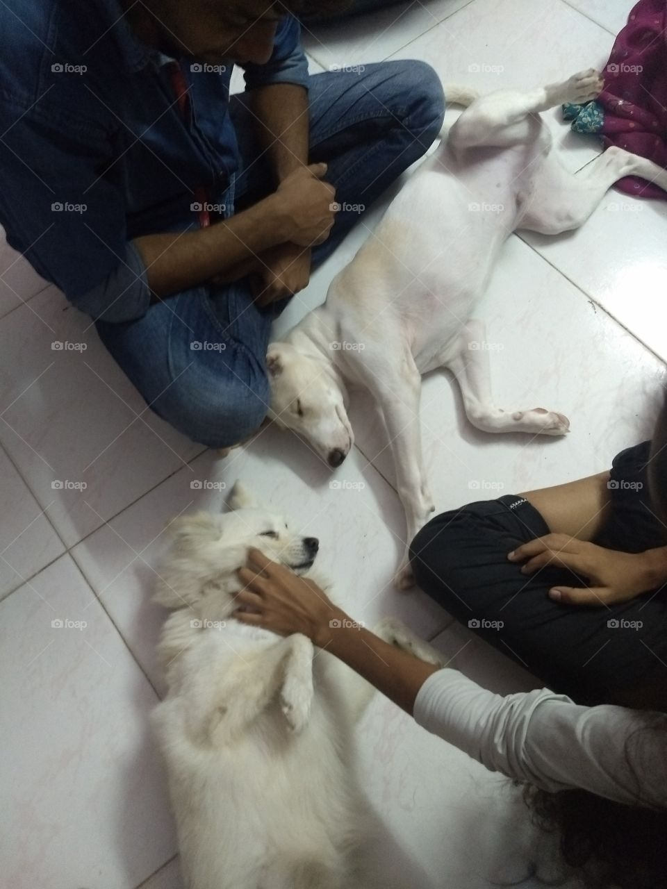 they feel secure with us, pets are like family