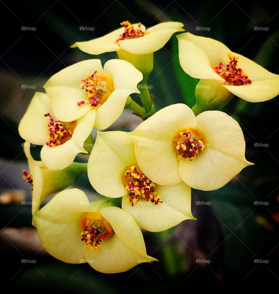 Clusters of soft yellow flowers