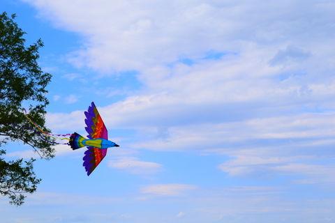kite flying Saturday's