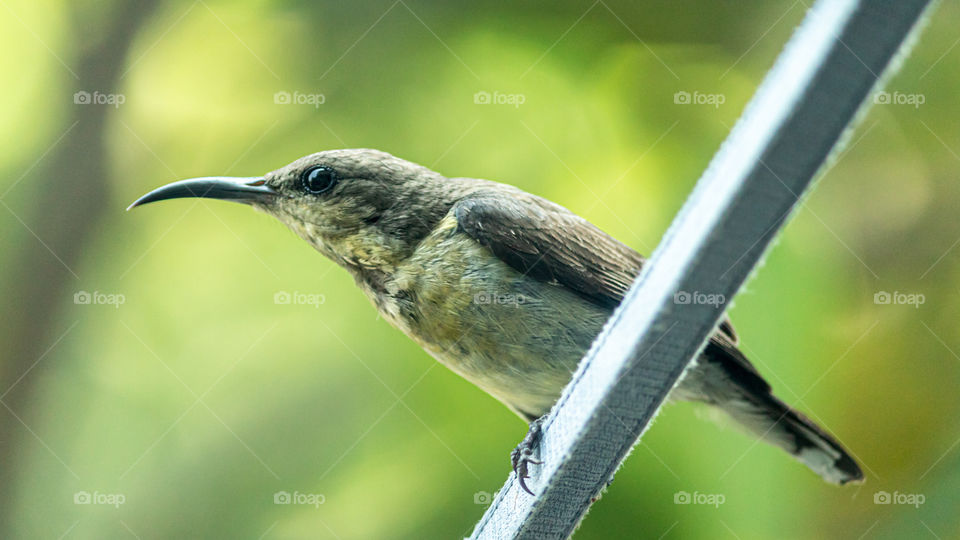 The Sunbird ✓full screen view is recommended (landscape)