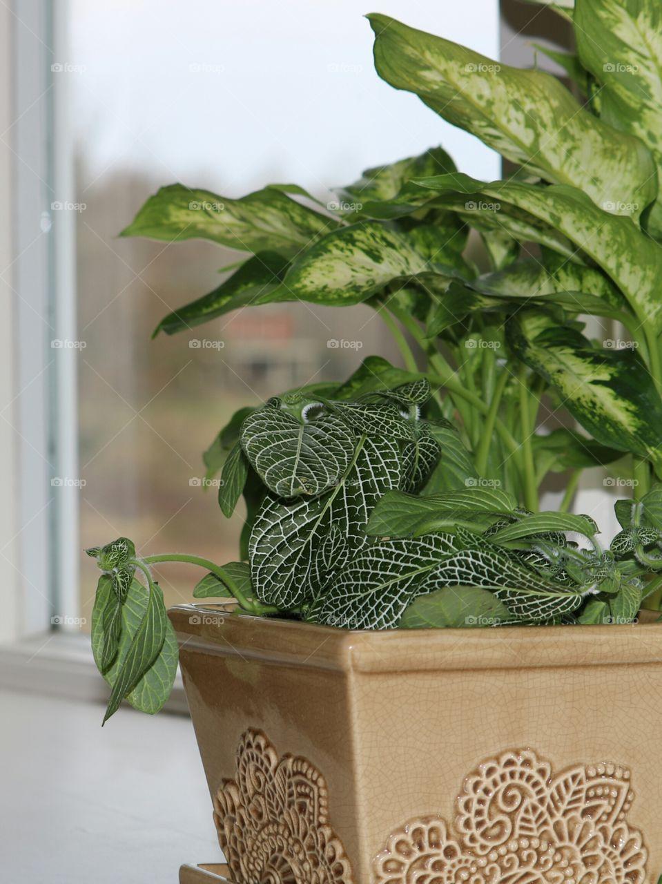 house plants in pot