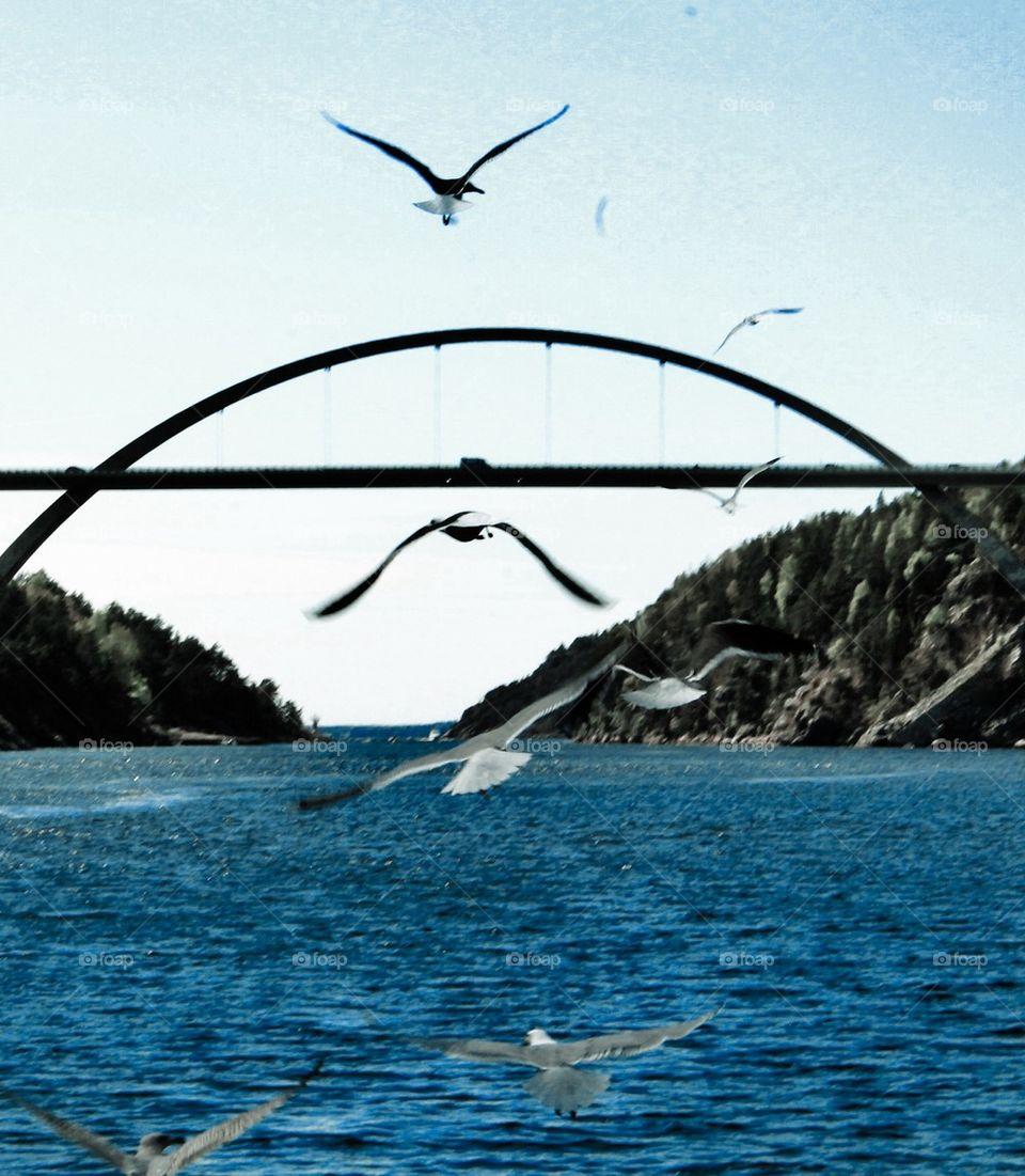 The new bridge of Svinesund