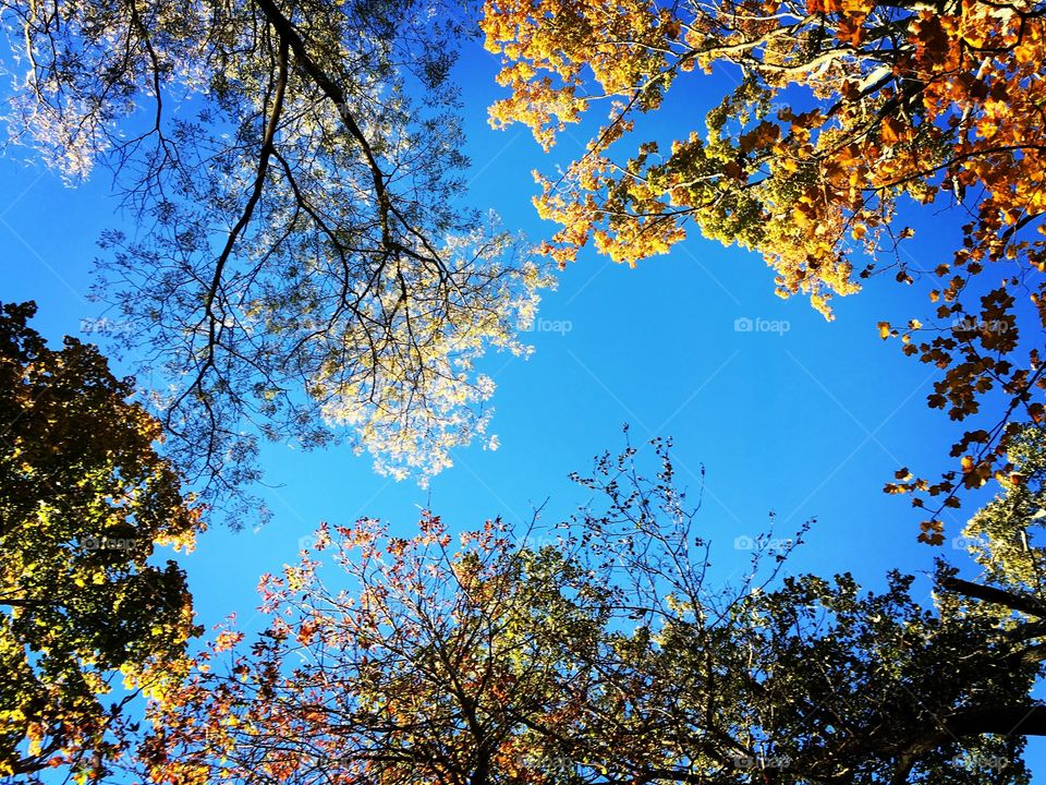 Fall-Looking Up- in Ohio 2015