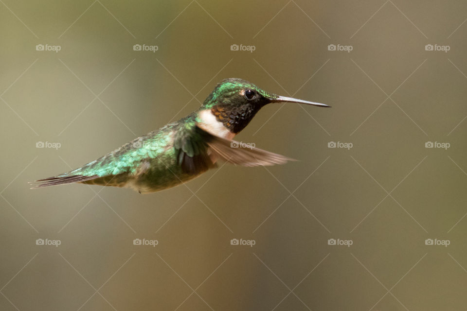 a beautiful hummingbird flying over me in South Georgia. such a beautiful creature. so graceful and amazing