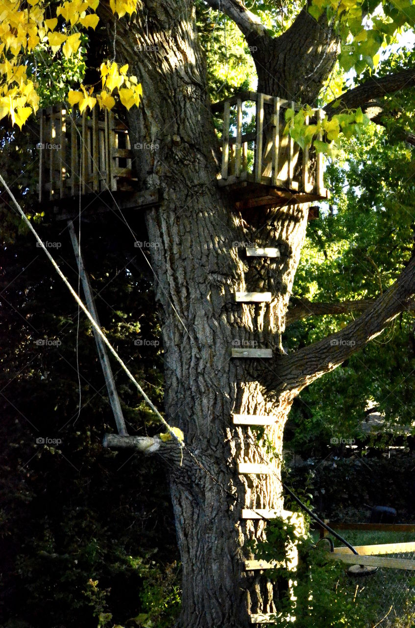 Small wooden structure on tree