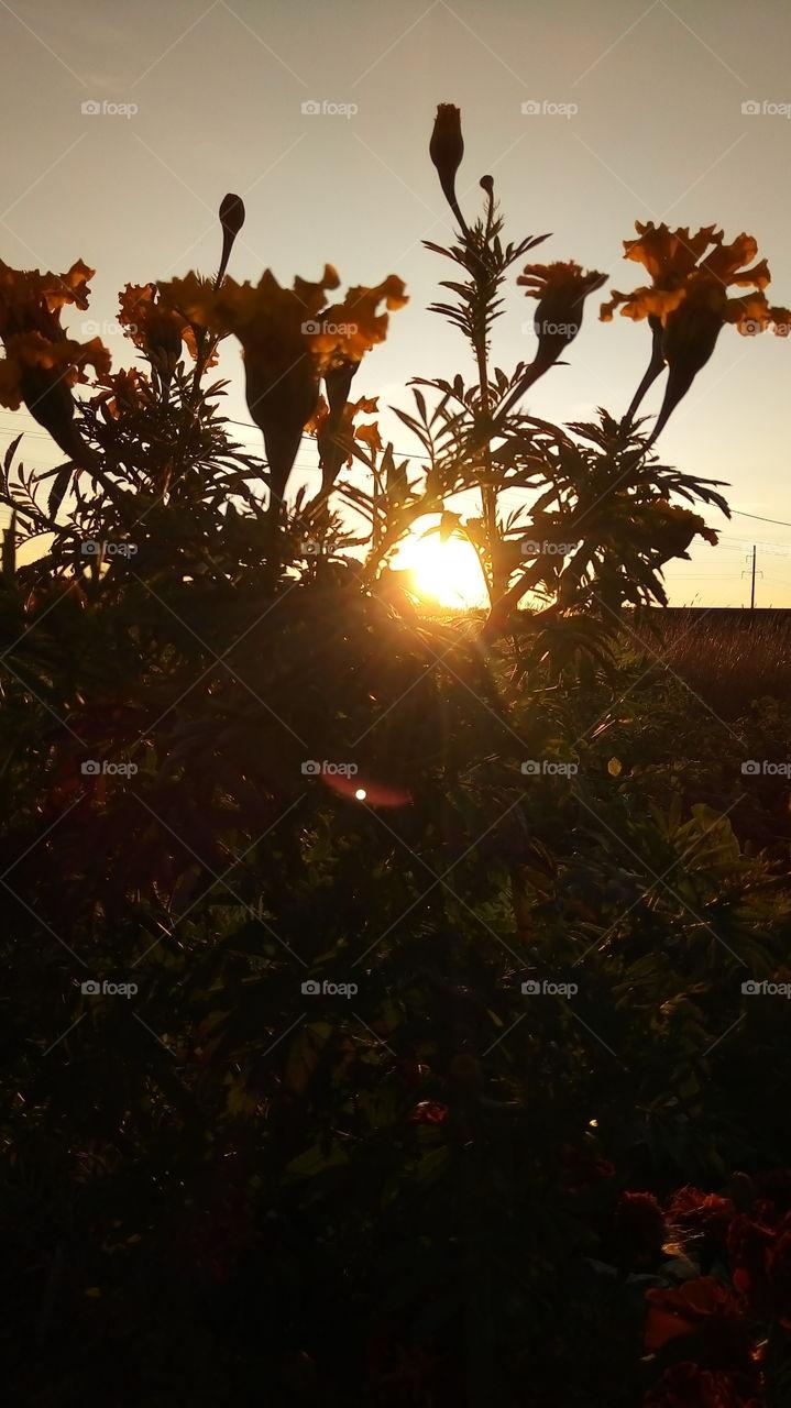 закат.природа.флора.солнце.цветы.